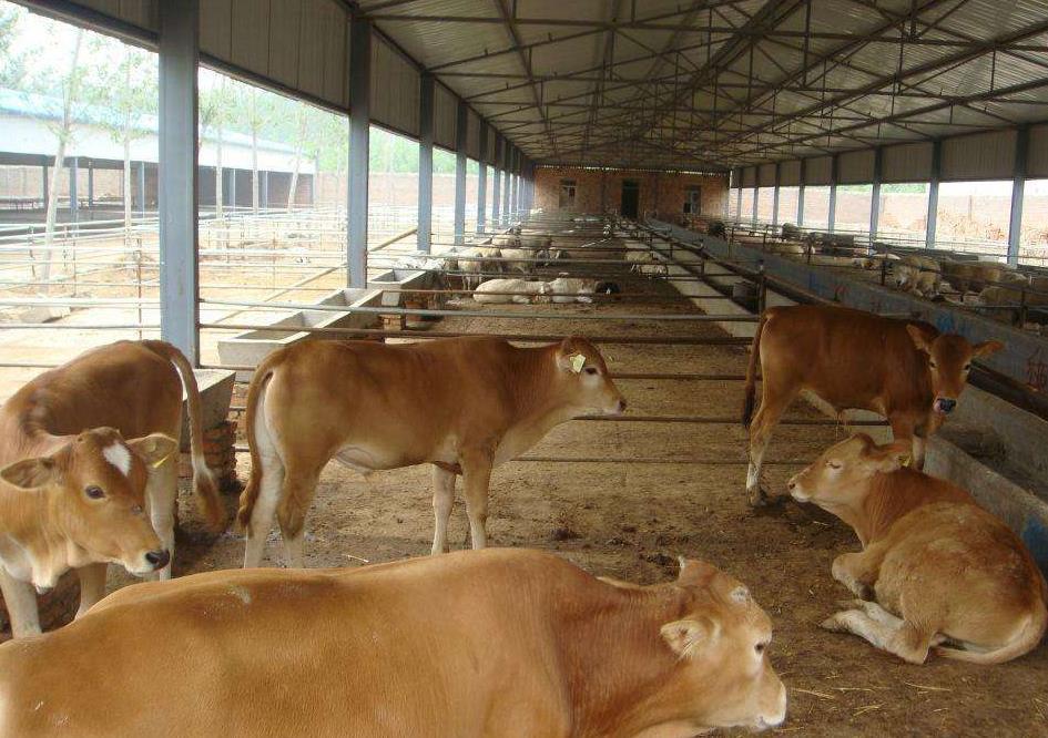 牛粪有机肥生产线设备要多钱?