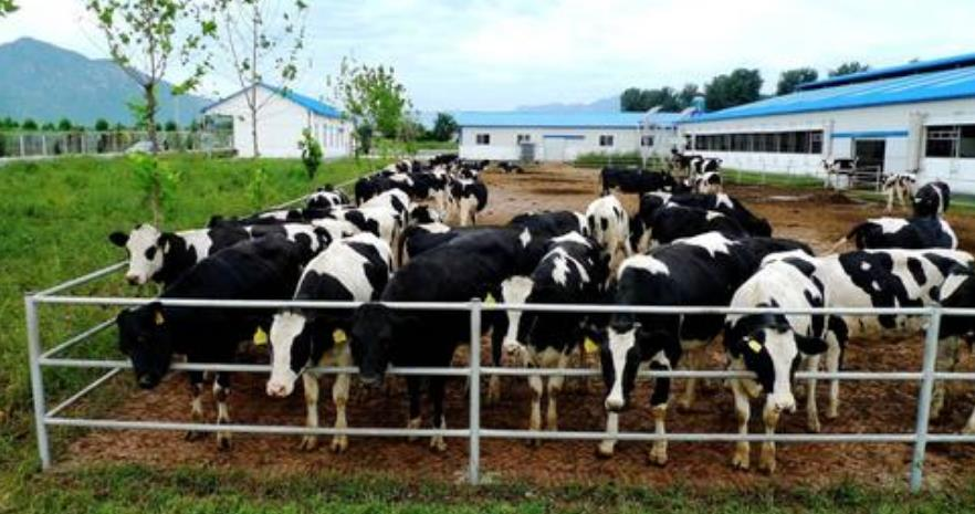 一吨鲜牛粪生产多少有机肥