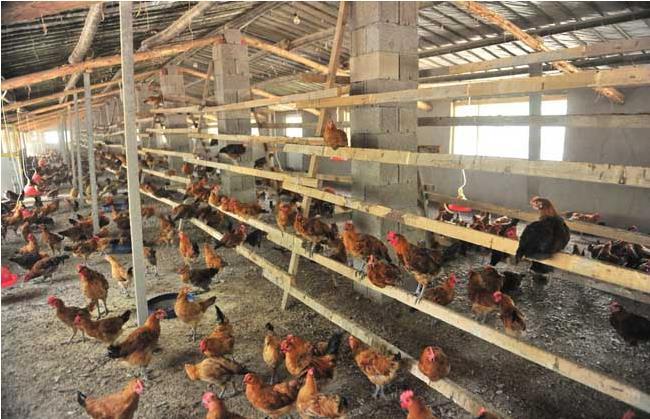 养鸡场鸡粪简易处理设备有哪些?
